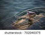 seagull at the sea | Shutterstock . vector #702040375