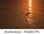 seagull flying over the sea at... | Shutterstock . vector #702041791
