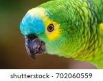 close up of turquoise fronted... | Shutterstock . vector #702060559