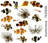 Collection Of 17 Tropical Fish...