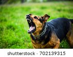 angry dog | Shutterstock . vector #702139315