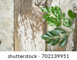 branch of green leaves on old... | Shutterstock . vector #702139951