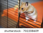 hamster trying to escape from... | Shutterstock . vector #702208609