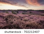 purple heather hills in bloom... | Shutterstock . vector #702212407