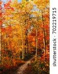 An Autumn Path