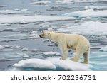 polar bear on small ice floe in ... | Shutterstock . vector #702236731