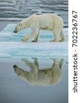 polar bear on ice floe in... | Shutterstock . vector #702236767