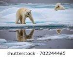 polar bear sow and cub on ice... | Shutterstock . vector #702244465
