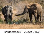 bull african elephants at the... | Shutterstock . vector #702258469