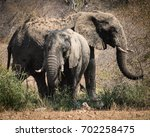 bull african elephants at the... | Shutterstock . vector #702258475