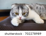 funny cat is looking directly... | Shutterstock . vector #702278989