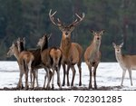 adult great deer  cervus... | Shutterstock . vector #702301285