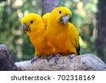 Couple Of Yellow Brazilian...