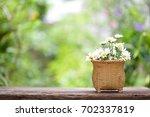 white flower in wicker baskets | Shutterstock . vector #702337819