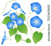 blue morning glory. isolated on ... | Shutterstock .eps vector #702345835
