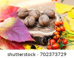 botanical background with... | Shutterstock . vector #702373729