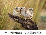 little owl's family portrait | Shutterstock . vector #702384085