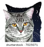gray tabby cat with yellow eyes | Shutterstock . vector #7025071