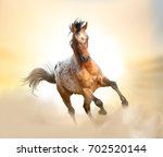 beautiful appaloosa stallion... | Shutterstock . vector #702520144