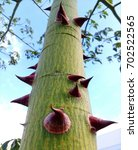close up of huge curved spikes... | Shutterstock . vector #702522565