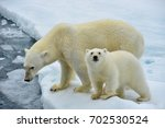 polar bear sow and cub at edge... | Shutterstock . vector #702530524