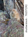 Small photo of American Pika, ochotona princeps, Banff National Park, Alberta, Canada