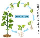 diagram showing bean life cycle ... | Shutterstock .eps vector #702584107