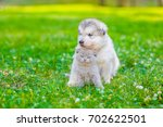 Stock photo cute puppy embracing kitten on summer green grass space for text 702622501