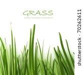 beautiful grass   Shutterstock . vector #70262611