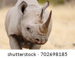 Black Rhino Head Portrait ...