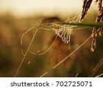 morning dew in the marshlands | Shutterstock . vector #702725071