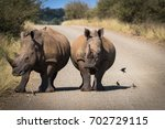 two rhinos in the road  with a... | Shutterstock . vector #702729115