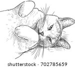 sketch of a sleepy lazy cat | Shutterstock .eps vector #702785659