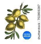 hand drawn argan nuts branch...   Shutterstock .eps vector #702803287