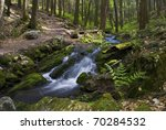 A mountain stream and green woods with ferns in Stokes State Forest in New Jersey. - stock photo