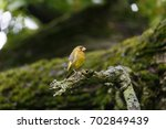 moscow  russia. zelenushka bird ...   Shutterstock . vector #702849439