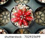 cactus    Shutterstock . vector #702925699