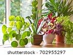 indoor plants display. house... | Shutterstock . vector #702955297