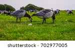 Wild Geese Eat In The City