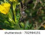Wheel Bug Or Assassin Bug With...