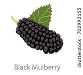 black mulberry icon. isometric... | Shutterstock .eps vector #702992155