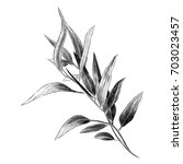 eucalyptus leaves sketch vector ... | Shutterstock .eps vector #703023457