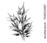 Eucalyptus Leaves Sketch Vecto...
