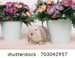 little cute decorative rabbits. ... | Shutterstock . vector #703042957