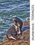 Seal Beauty Pageant Handsome...