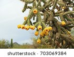 Yellow Fruit Of A Cactus Known...