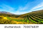 olive groves and vineyards... | Shutterstock . vector #703076839