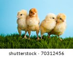 easter eggs and chickens on... | Shutterstock . vector #70312456