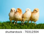easter eggs and chickens on... | Shutterstock . vector #70312504