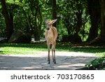 Small photo of Eld Deer